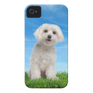 Maltese Puppy iPhone 4/4S Case
