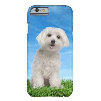Maltese Puppy iPhone 6 case