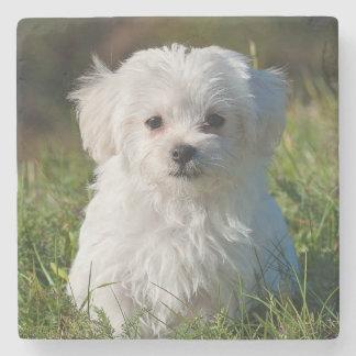 Maltese puppy stone coaster