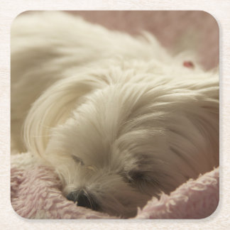 maltese sleeping square paper coaster