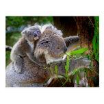 Mama and Baby Koalas Postcards