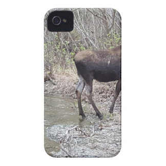 Mama and Baby Moose iPhone 4 Cover