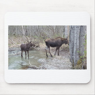 Mama and Baby Moose Mouse Pad