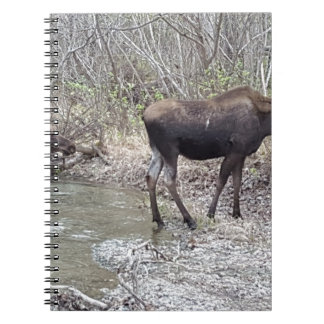 Mama and Baby Moose Spiral Notebook