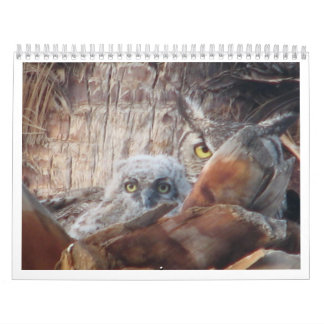 Mama And Baby Owls In A Palm Tree Calendar