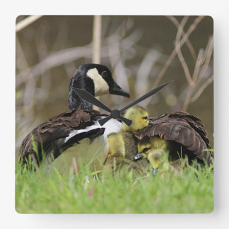 Mama Goose and her goslings Square Wall Clock
