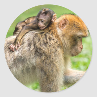 Mama monkey with baby monkey on back sticker