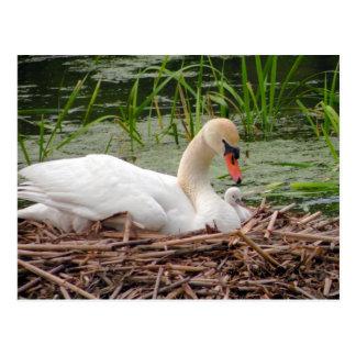 Mama Swan and Baby Postcard