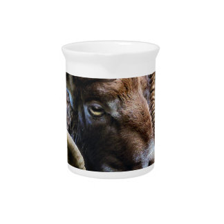 Mammal Nature Animal World Animal Mouflon Pitcher