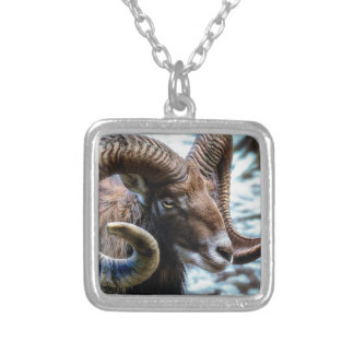 Mammal Nature Animal World Animal Mouflon Silver Plated Necklace