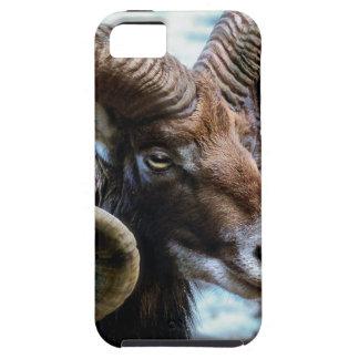 Mammal Nature Animal World Animal Mouflon Tough iPhone 5 Case