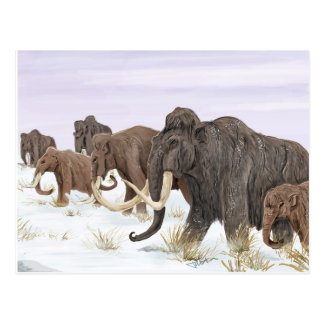 Mammoth Family Postcard