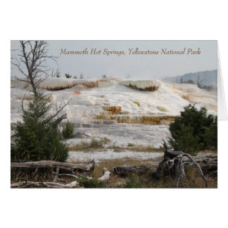 Mammoth Hot Springs, Yellowstone National Park Card