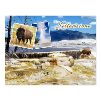 Mammoth Hot Springs, Yellowstone National Park Postcard