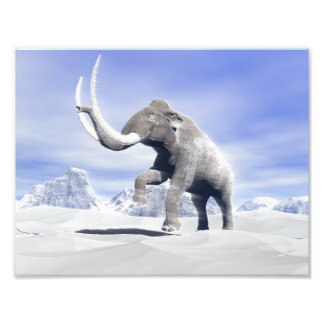 Mammoth in the wind photograph