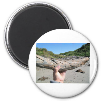 mammoth tusk 6 cm round magnet