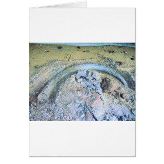 mammoth tusk in kotz ak greeting card