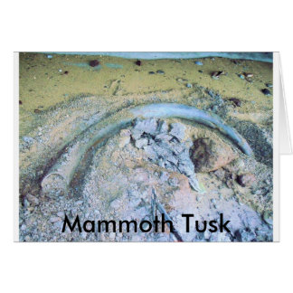 mammoth tusk in kotz ak cards
