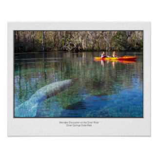 Manatee Encounter Poster