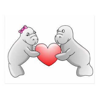Manatee love postcard