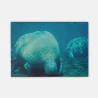 Manatee Photo Post-it Notes