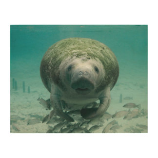Manatee Wood Wall Art