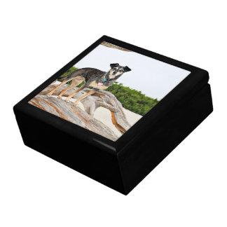 Manchester Terrier X - Jordan - Derr Large Square Gift Box