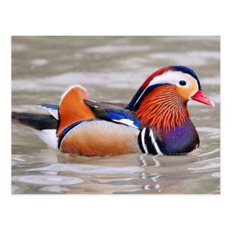 Mandarin duck (Aix galericulata) Postcard