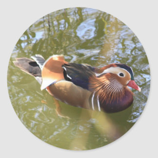 Mandarin Duck Classic Round Sticker