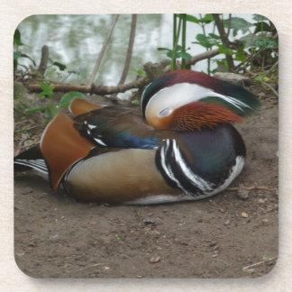 Mandarin Duck Beverage Coaster