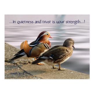 Mandarin ducks togertherness postcard