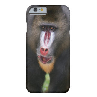 Mandril (Mandrillus sphinx) close up Barely There iPhone 6 Case