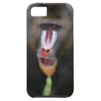 Mandril (Mandrillus sphinx) close up iPhone 5 Cover