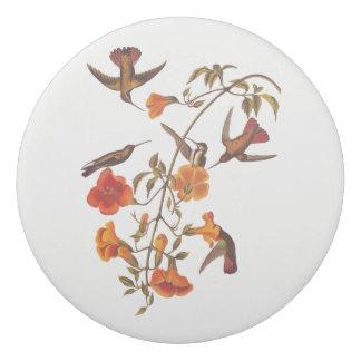 Mangrove Hummingbirds with Orange Trumpet Flowers Eraser