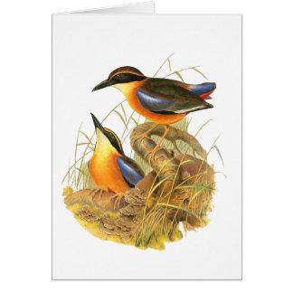 Mangrove Pitta Card