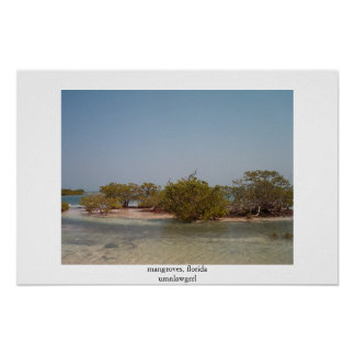 mangroves, florida poster