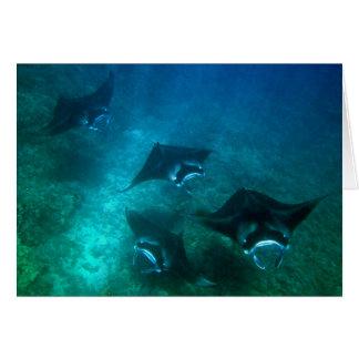 Manta ray card