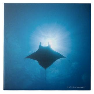 Manta swimming underwater tile