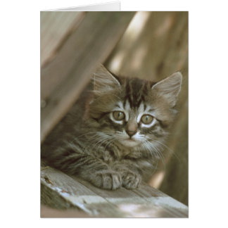 Manx Kitten Card