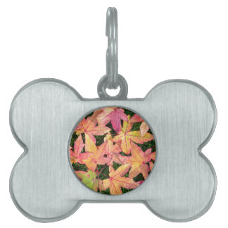 Many colorful autumn maple leaves on green grass pet tag