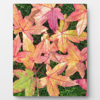 Many colorful autumn maple leaves on green grass plaque
