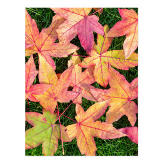 Many colorful autumn maple leaves on green grass postcard