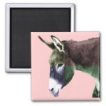 Many Colours Burro - Colour Me Wild Animal Lovers Square Magnet