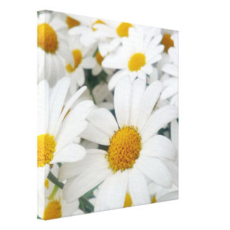 many Daisies Stretched Canvas Print