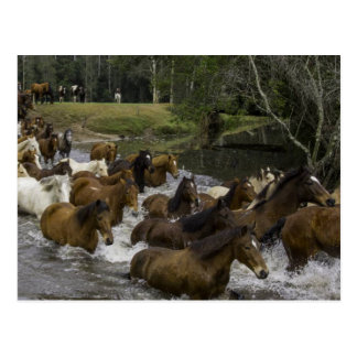 Many horses pass the river in forest postcard