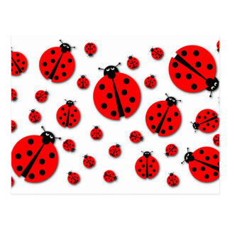Many Ladybugs Shadows Postcard