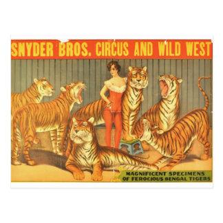Many Pet Tigers Postcard