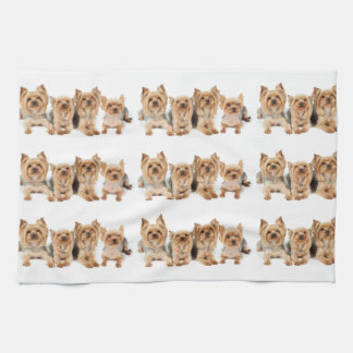 Many yorkies tea towel