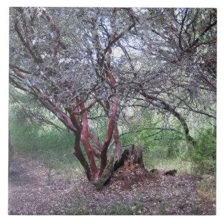 Manzanita Tree Large Square Tile