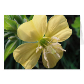 Map 2, map series yellow game flower bloom, in bla card